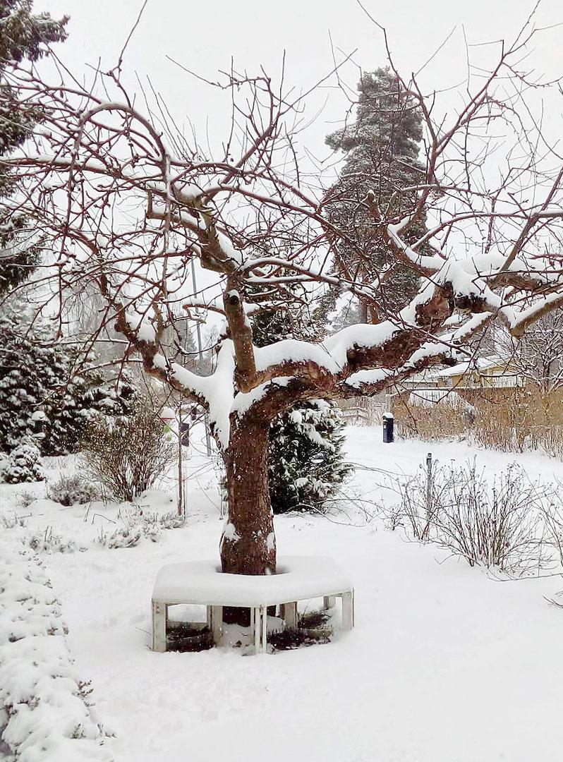 ulla-stinas-tradgard-vintertrad
