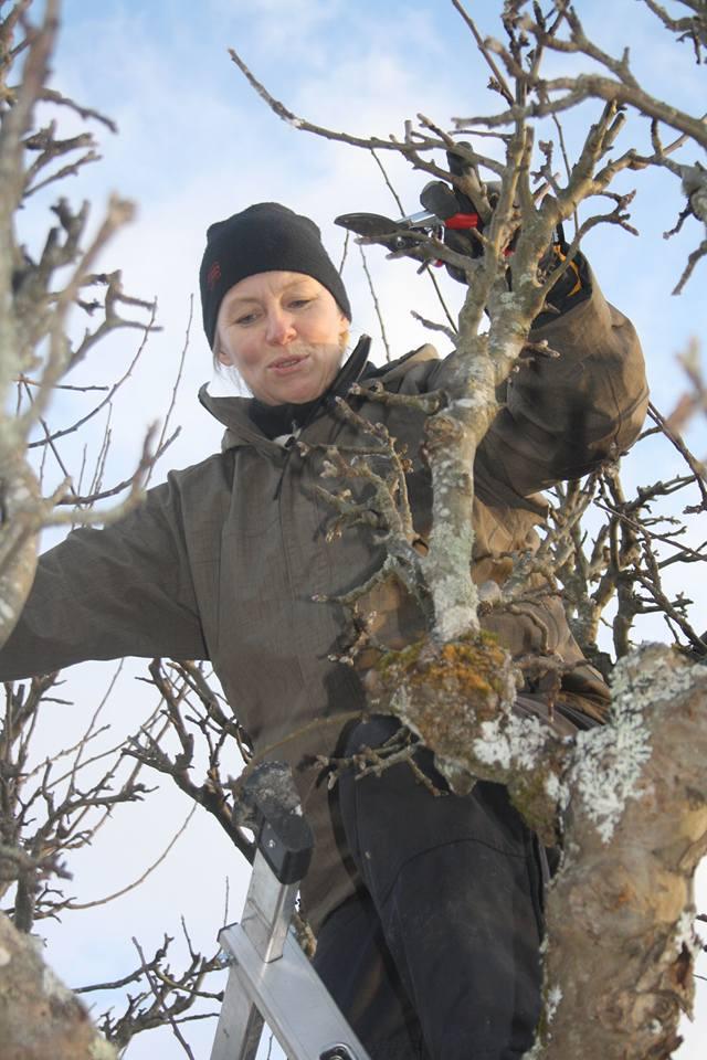 Trädgårdsmästare Ulla-Stina beskär träd