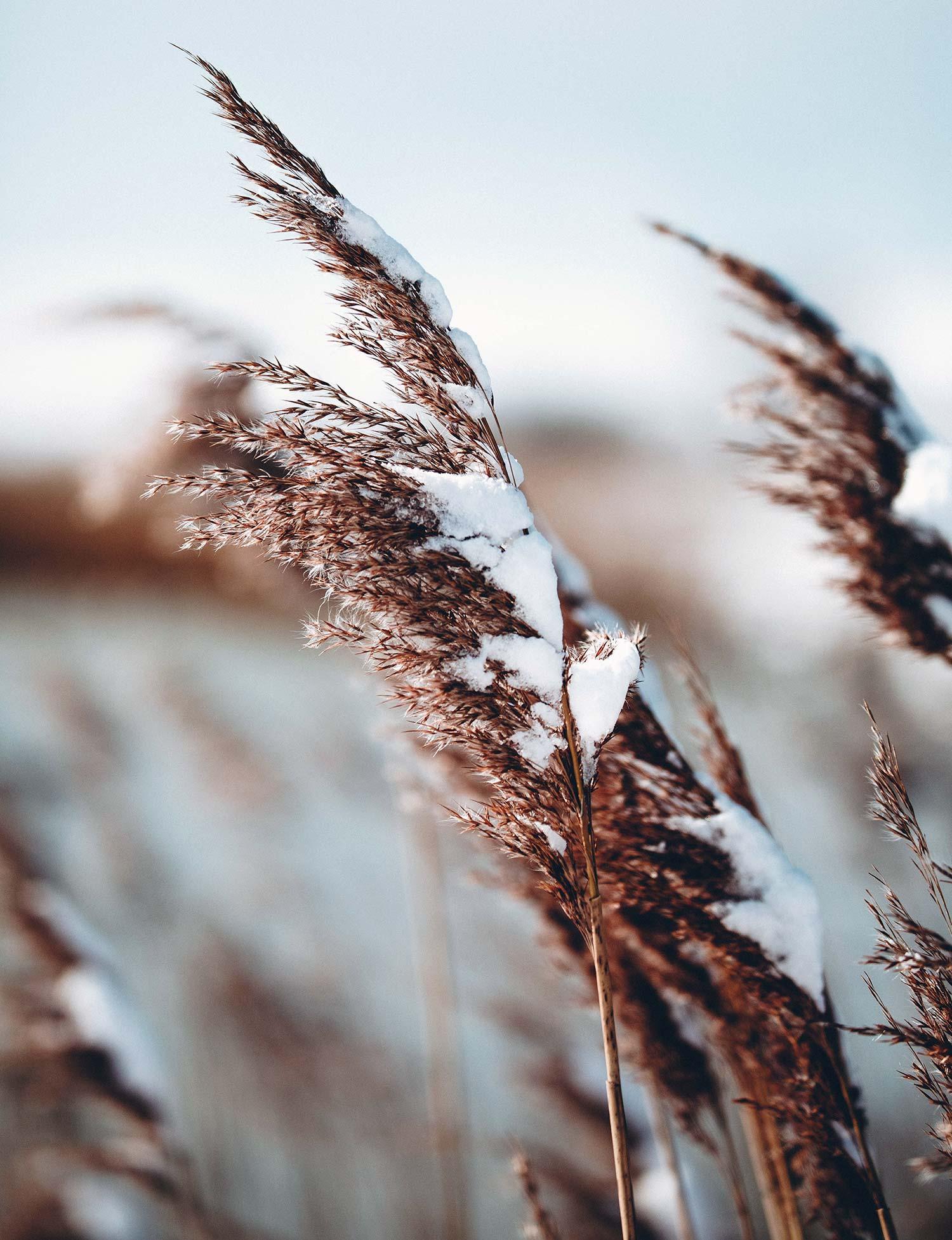 vinter-tradgardsdesign